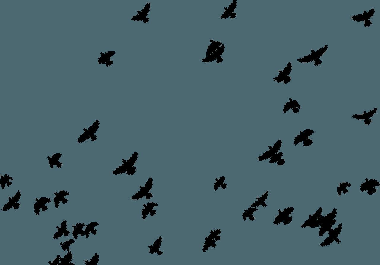 Problemi dell'ambiente urbano: i piccioni