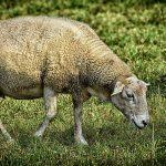 I prodotti per la zootecnica: un aiuto insostituibile in fattoria